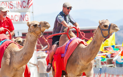 2013 Virginia City Camel Races 08