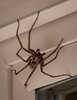 WHOAAA!  If you think this image gets your attention you should see this whopper Cross Garden Orb Spider in real life !