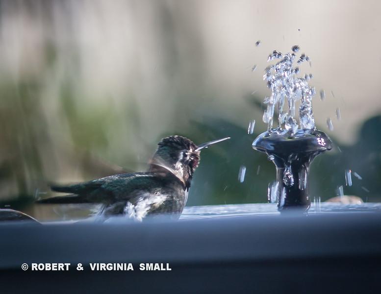 A WARM BATH BY THE HEATED SPRAY