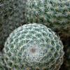 Desert Spirals