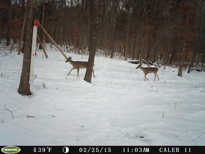 Caleb Deer Camera January through February 2015