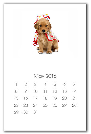 """All the Calendar pages are sized to print 11"""" x 17"""" (Album Cover Image)"""