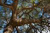 Experienced oak