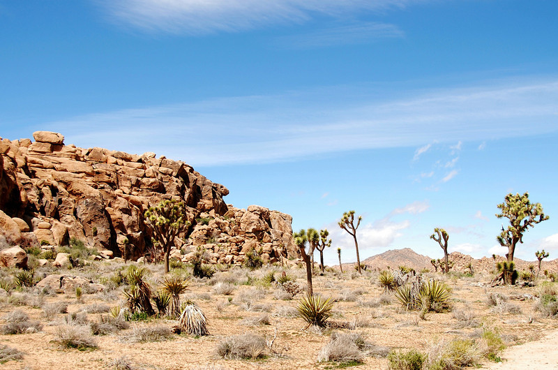 1 OUR FIRST STOP WAS JOSHUA TREE STATE PARK
