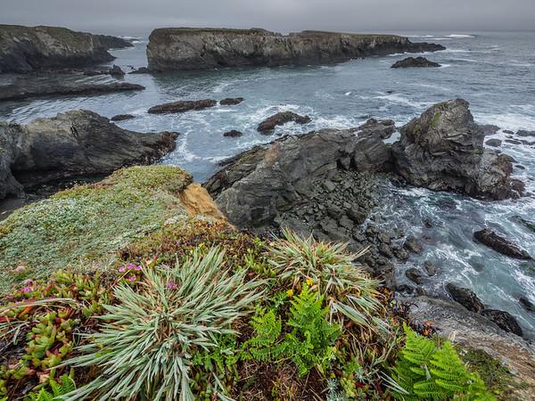 Succulents - Mendocino Headlands