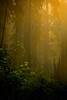 The California redwoods are often bathed in fog. But you can use this to your advantage.<br /> Photo © Cindy Clark