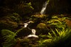Trillium Falls in Northern California is just as lovely in the spring as in the fall.<br /> Photo © Cindy Clark
