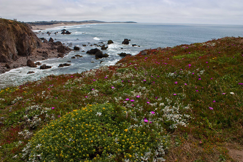 Coastal foliage brightens the scene along the Sonoma coast.<br /> Photo © Carl Clark