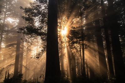 Arrival Redwoods National Park, CA 抵達 加州紅木國家公園