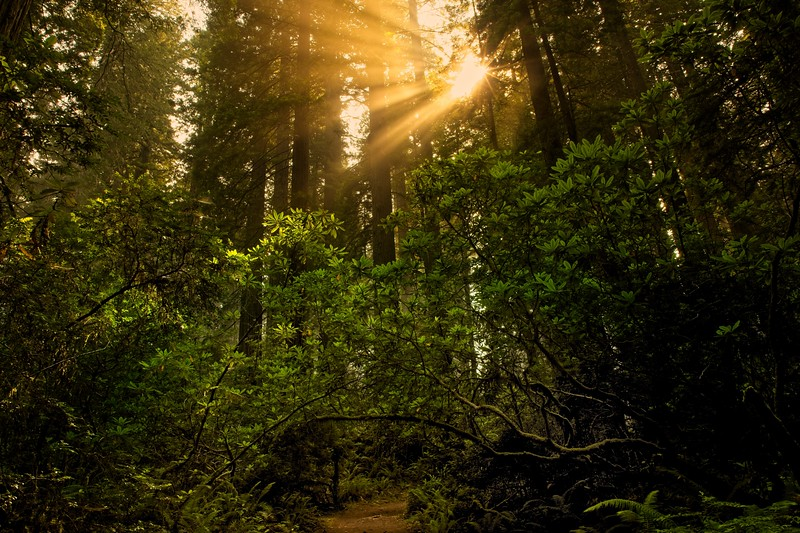 A sunrise hike on Damnation Creek trail in the California redwoods.<br /> Photo © Cindy Clark