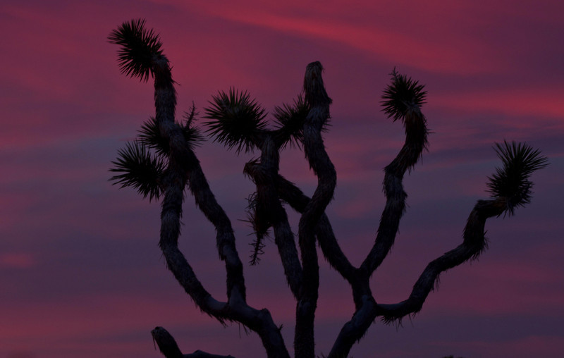The desert hallucinates in cactus.<br /> Photo © Cindy Clark
