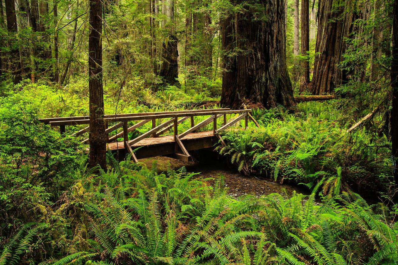 Footbridge Redwoods National Park, CA 行人橋 加州紅木國家公園