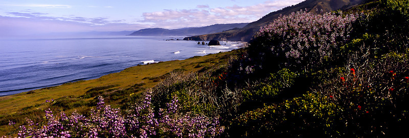 Springtime display of lupine and paintbrush along the northern coast.<br /> Photo © Carl Clark