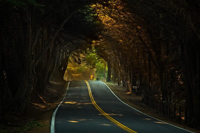 A stretch of Highway 101 near Leggett.<br /> Photo © Cindy Clark