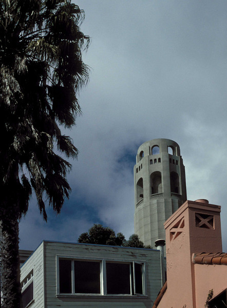 Classic San Francisco scene with palm tree and Coit Tower.<br /> Photo © Carl Clark