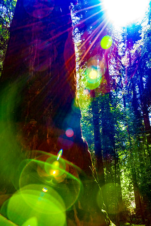Lens Flare and Trees