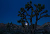 Moonset at Joshua Tree National Park.<br /> Photo © Cindy Clark