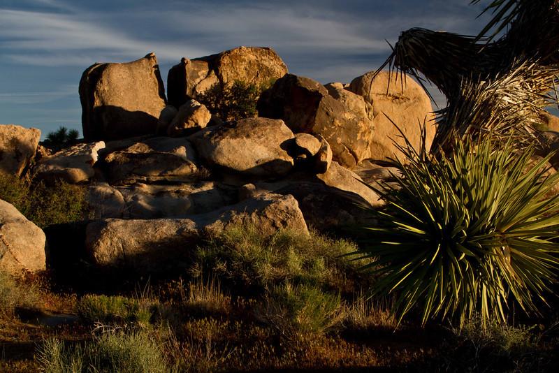 Morning shadows dramatize the scene at Joshua Tree.<br /> Photo © Carl Clark