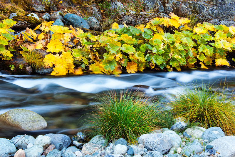 Yuba River Autumn 2_7473