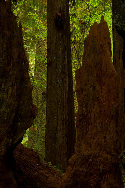 Ethereal light in the Stout Redwood Grove.<br /> Photo © Cindy Clark