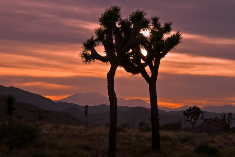 Dimming of the day at Joshua Tree National Park.<br /> Photo © Cindy Clark