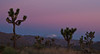Predawn glow at Joshua Tree.<br /> Photo © Cindy Clark
