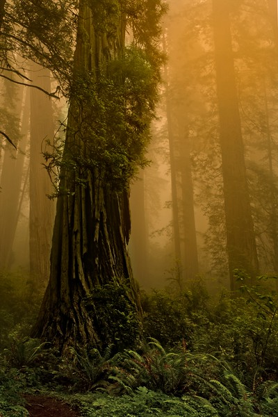 Haunting scene on our hike in the California redwoods.<br /> Photo © Cindy Clark