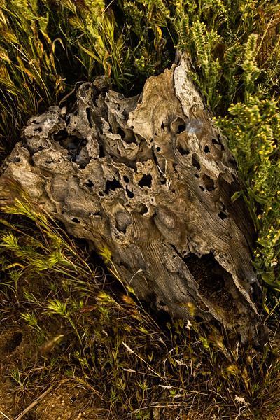 When a Joshua Tree dies . . .<br /> Photo © Cindy Clark