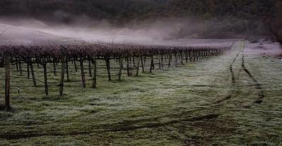 _MG_6935 vin fog truck tracks cr