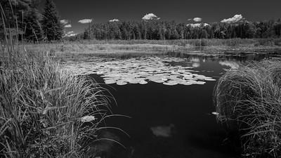 Pond View Roadside