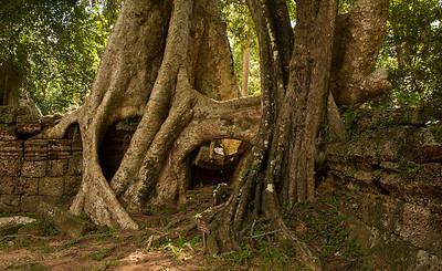 Ta Prohm, Angkor Thom