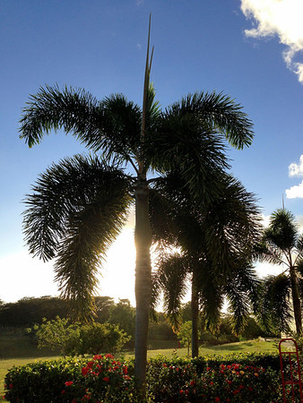 A beautiful palm at sunset near Arroyo Puerto Rico.