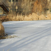 This was also a test of the camera's ability to render the shadows on the snow, while capturing the color of the cattails. Sharp, color is great.