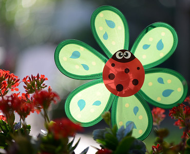 ladybug waits for a breeze