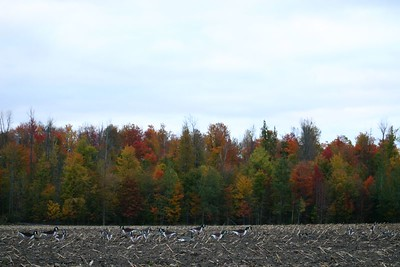 Early Thanksgiving morning in field near Kemptville