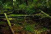 Enchanted forest on the trail to Skookumchuck Narrows on the Sunshine Coast in British Columbia.<br /> Photo © Carl Clark