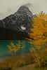 Mt Chephren framed by aspens. Canadian Rockies.<br /> Photo © Carl Clark