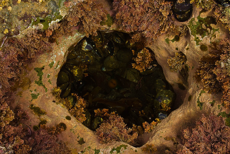 Another delightful tidepool at Botanical Beach, Vancouver Island, B.C.<br /> Photo © Cindy Clark
