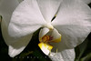 White Orchid - Shot Using Canon EOS 5D Mark II and a Canon EF 100mm f/2.8 USM Macro lens --- JohnBrody.com