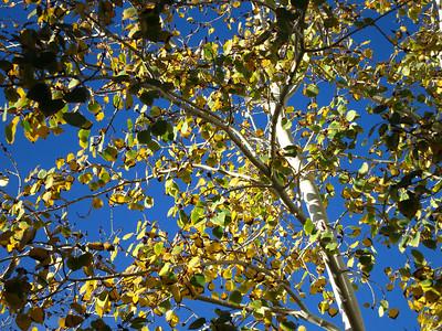 Shot in Foliage mode under SCN