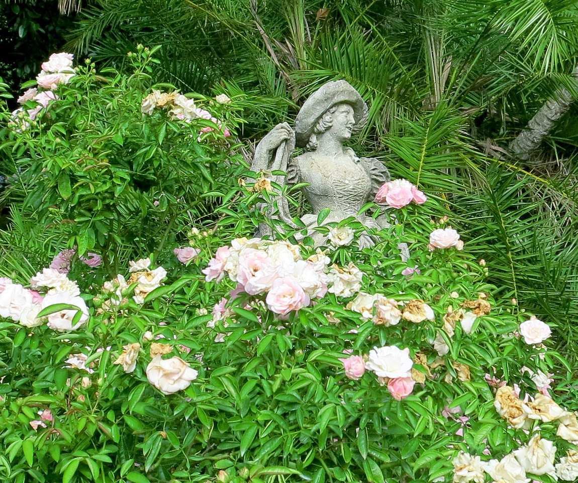 Roses in the Gardens at the Ringling estate