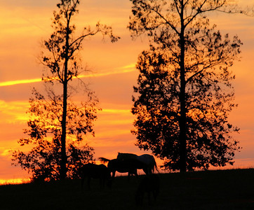 Wild-Horses-At-Sunset