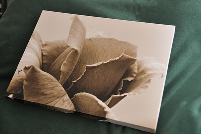 18x13 - Interesting view of a Rose. Light Sepia, neutral tone.