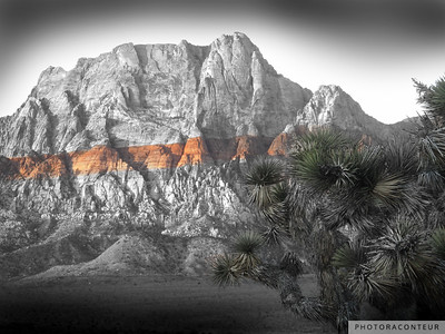 """Mt. Wilson No. 2, Red Rock Canyon"" ~ B&W composition of Mount Wilson located within Red Rock Canyon near Las Vegas, Nevada.  The red stripe across the mountain is its most distinguishing feature, and this has been tinted to its actual color.  The Joshua tree in the foreground has also been tinted to its natural color."