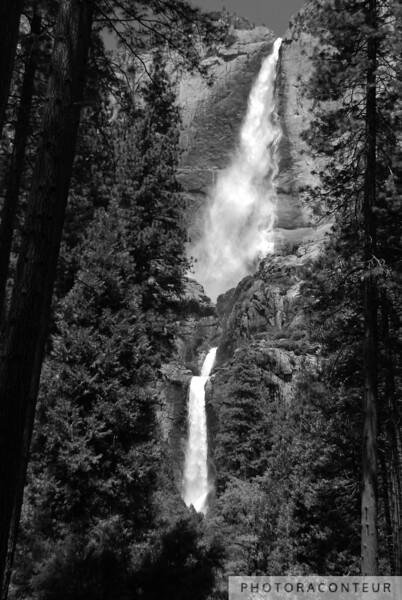 Yosemite Falls Treescape