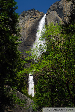 """Yosemite Falls Vista"" ~ View of Upper and Lower Yosemite Falls in Yosemite National Park.   These falls along with the Middle Cascades form the tallest waterfall in North America and the 5th largest in the world, with a height of 2425'.  Only one building or other structure constructed by man has yet to eclipse this height"