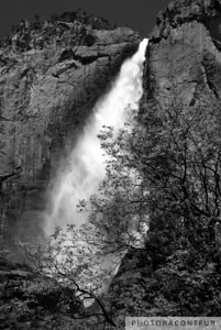 """Upper Yosemite Fall Treescape"" ~ View in Yosemite National Park of the Upper Yosemite Fall flanked by tree branches.  The upper fall measures 1430' in height."