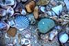 Shells<br /> Chatham, MA<br /> Image #:672