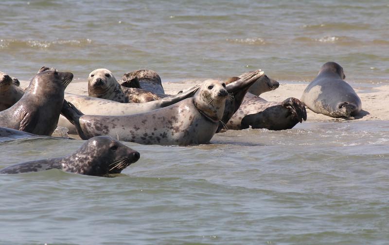 Seals of Chatham<br /> Chatham, MA<br /> Image #:2560