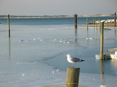Cape Cod, Winter 2003